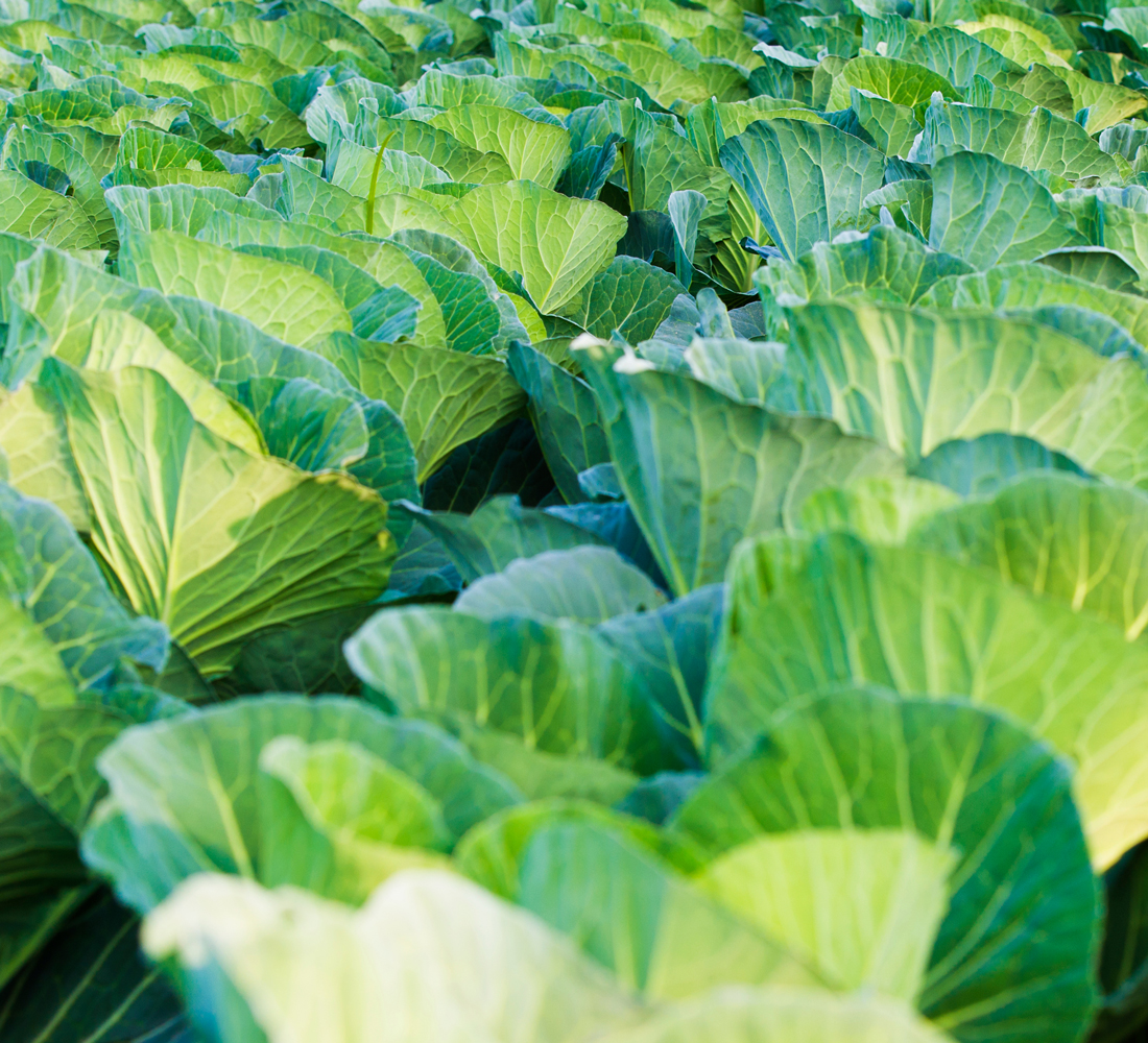 Certificazione Produzione Integrata - colture intensiva